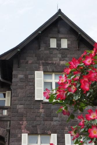 旧古河邸の薔薇④