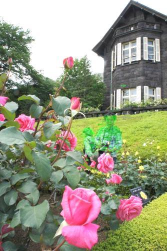 旧古河邸の薔薇③
