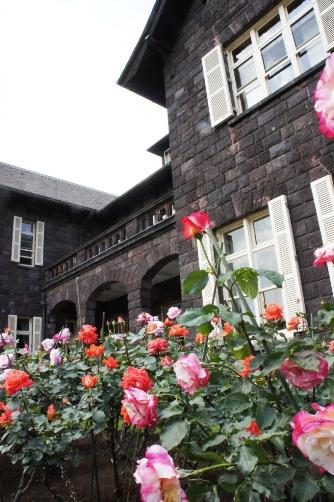 旧古河邸の薔薇①