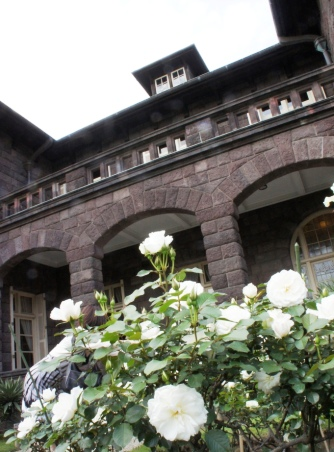 白薔薇と古河邸