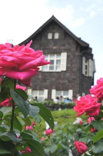 旧古河邸の薔薇⑤