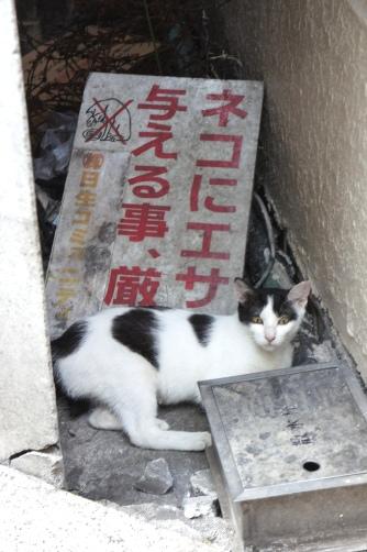 ネコにエサを与えること厳禁?