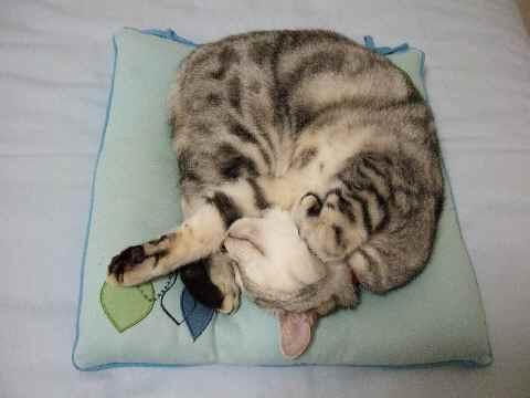 中心で寝る猫