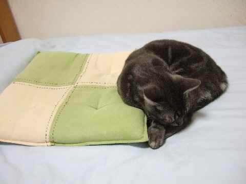 外れて寝る猫