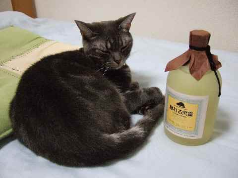 眠れる黒猫