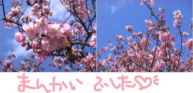 080227sakuraup.jpg