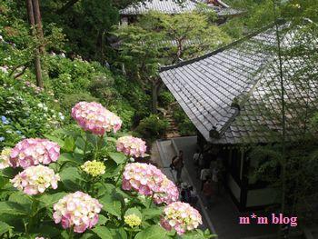 梅雨の鎌倉