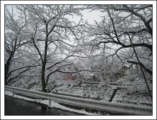 20110211-4.jpg