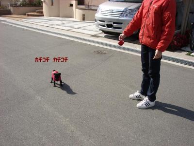 20070921_お散歩デビュー2