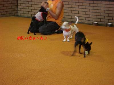 20070924_ドッグラン4