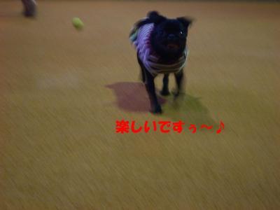 20070930_ドッグラン4
