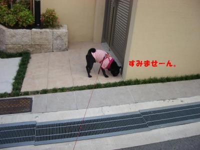 20071001_朝散歩2