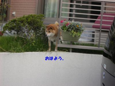 20071001_朝散歩3