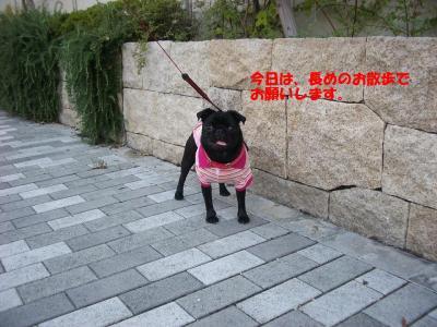 20071001_朝散歩5
