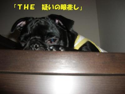 20071005_ごめん3