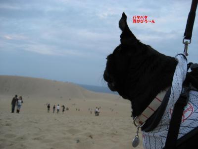 20071012_鳥取2