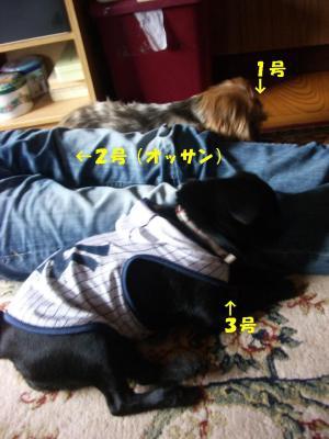 20071012_鳥取7