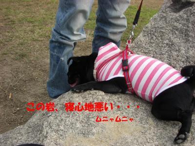 20071015_河川敷6