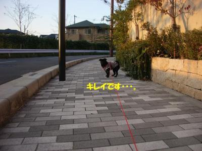 20071020_優しさ3