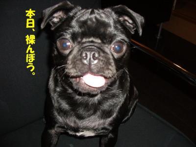 20071120_美肌1