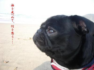 20071129_海8