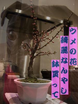 20080229_洗濯1