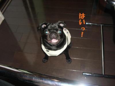 20070902_自己紹介(私)