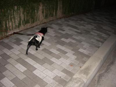 20070907_散歩1
