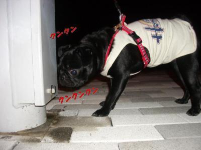 20070907_散歩2