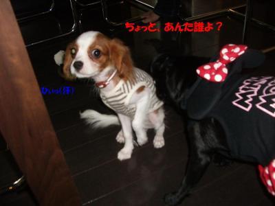 20070916_こころ4