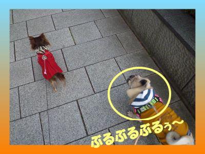 image17_20110206222216.jpg