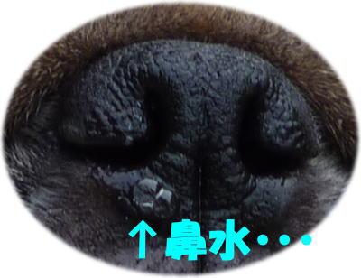 image1_20110211161951.jpg