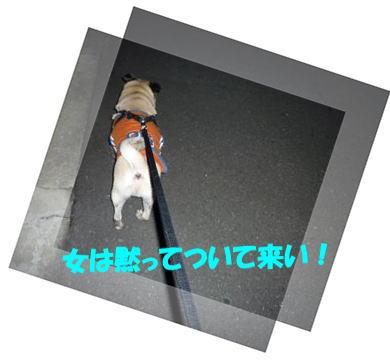 image1_20110220192001.jpg