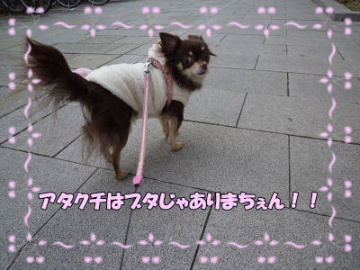 image4_20110208003207.jpg