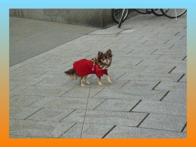 image6_20110205234718.jpg