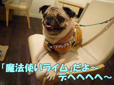 image6_20110220210807.jpg