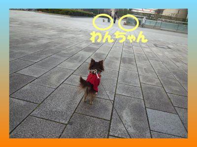 image7_20110205235451.jpg