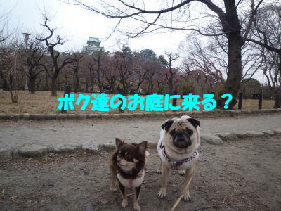 image9_20110208014037.jpg