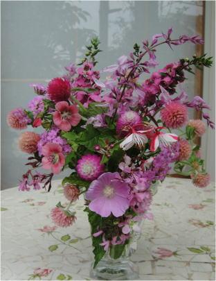 庭の花ピンクDSC09617