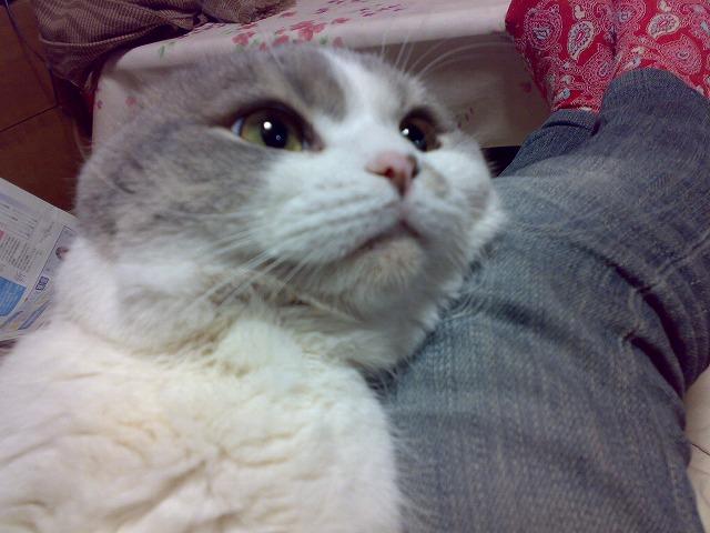 猫ブーム!?