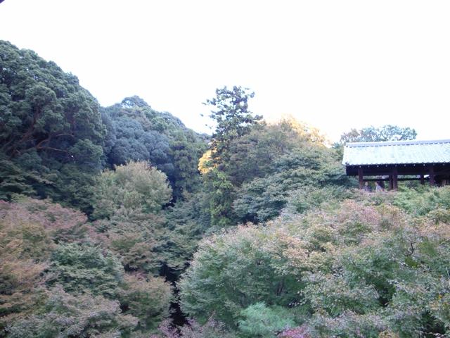 東福寺の紅葉5