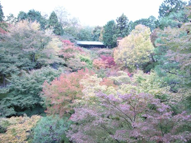 東福寺の紅葉6