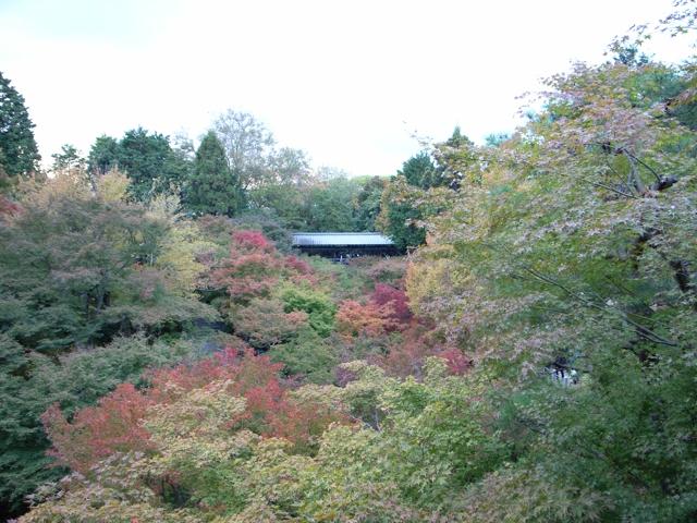 東福寺の紅葉7