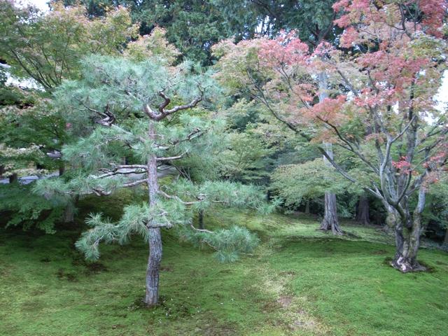 東福寺の紅葉8