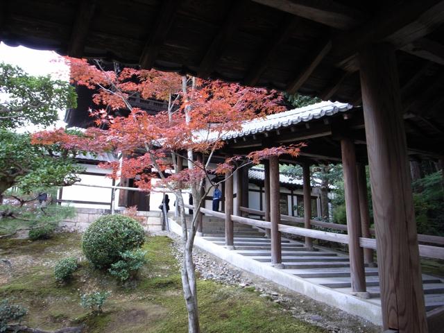 東福寺の紅葉9