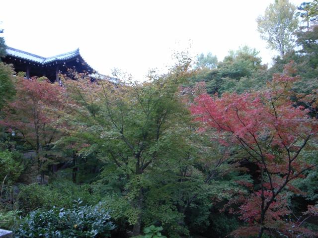 東福寺の紅葉14