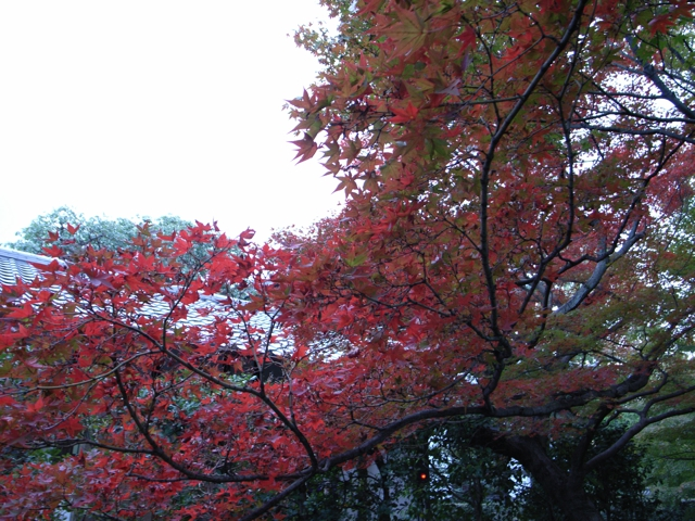 東福寺の紅葉15