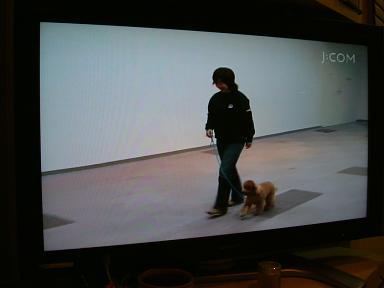 DSCF7203-TV.jpg