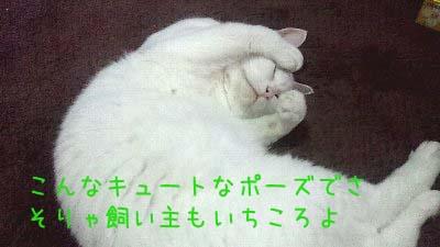 2011_10_25_07_11_19.jpg