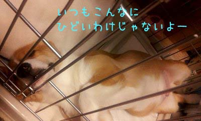 2012_02_07_11_03_15 (1)